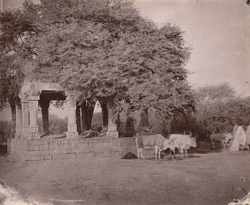 Ruins of a barakhambha or twelve-pillared hall, Rath, Hamirpur District.